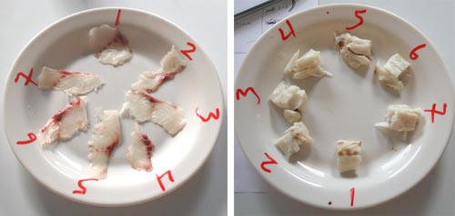24 Hours. Left Raw: 1) Japanese Bled; 2) CO2; 3) Ike Jime; 4) Japanese Bled Filleted; 5) Immediate Fillet; 6) Stressed; 7) N2O. Right Cooked: 1) Japanese Bled Filleted; 2) Ike Jime; 3) Immediate Fillet; 4) Japanese Bled; 5) Stressed; 6) CO2; 7) N2O