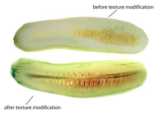 recipe: cucumber translucent inside [4]