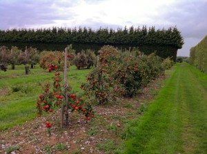 Heaven on earth: Rows of apples. Beyond that, 700 different types of pears. Beyond that, plums, nuts and cherry trees. In the distance, grouse and rabbit.  We could have stayed there for days.
